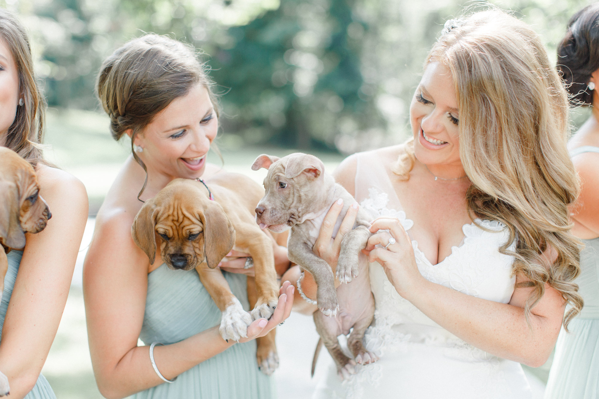 Bridesmaid Puppies 4