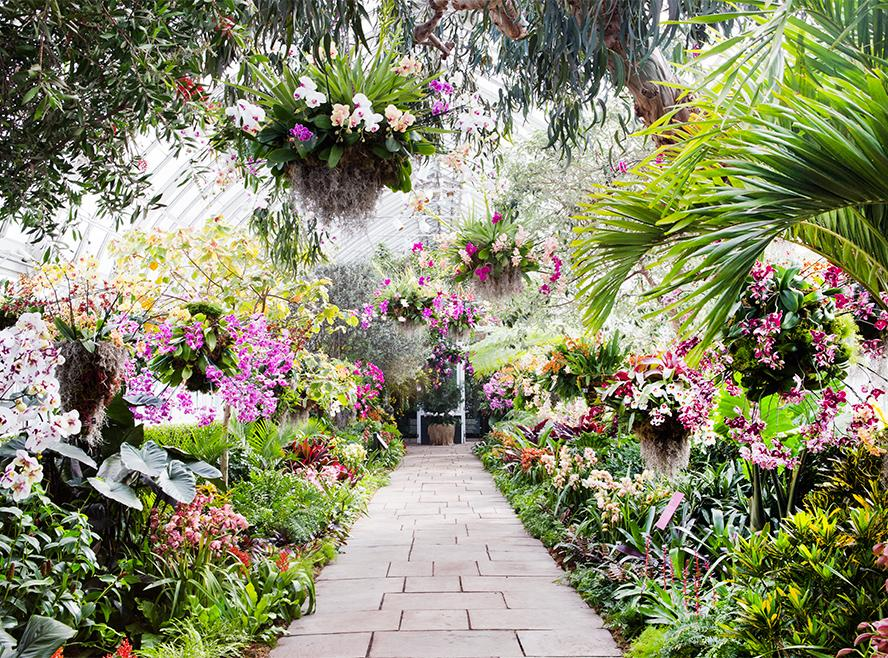 new york botanical garden 39 s orchid show sneak peek